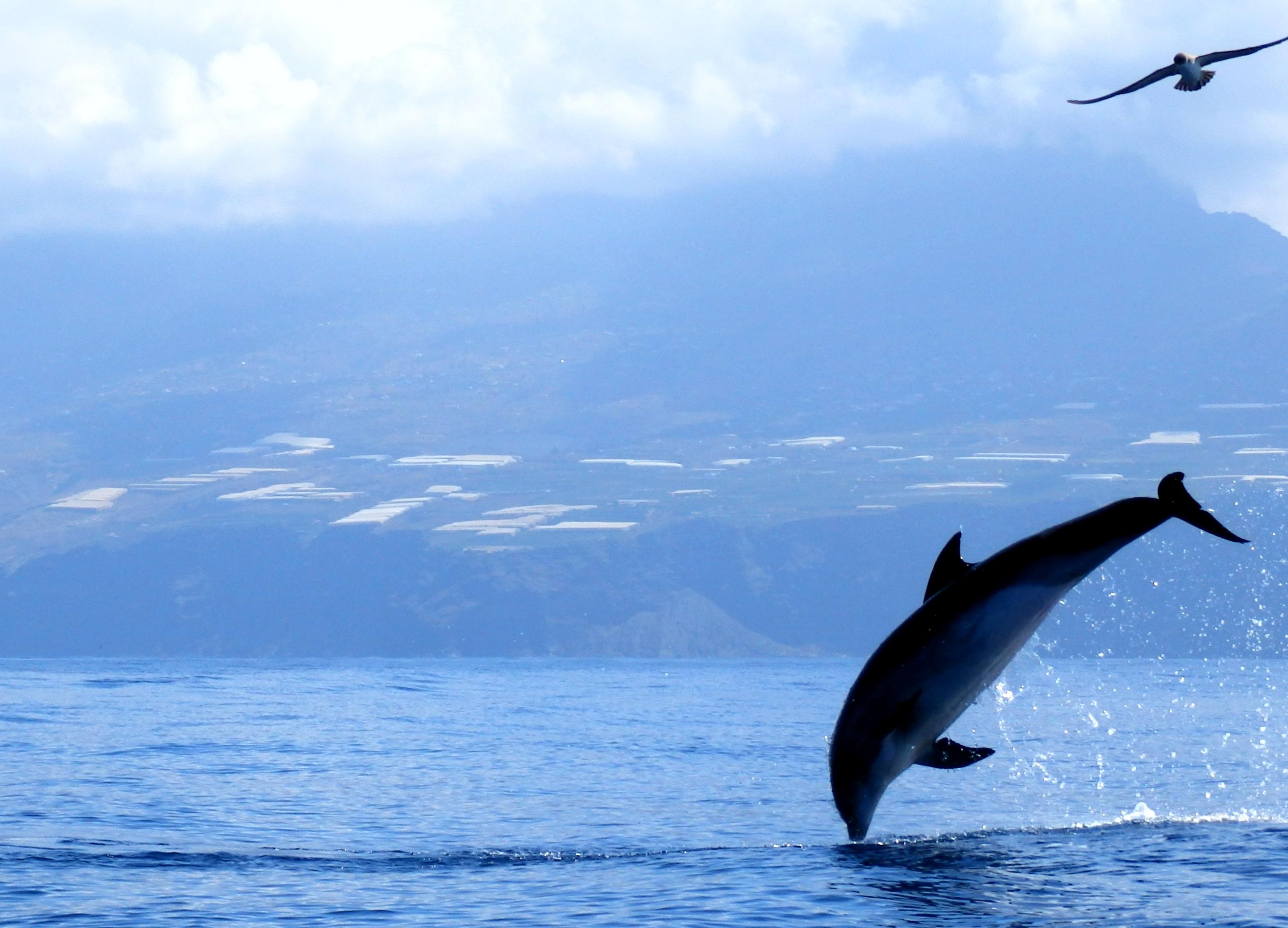 Dolfijnen Walvissen En Zeeschildpadden Vakantiehuis Op La Palma