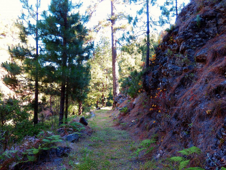 Het gezamelijke pad van de prlp 10 en 20 van La Traviesa op La Palma