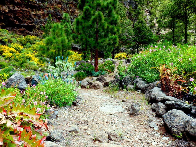 La Traviesa Prlp 10 barranco de Jieque op La Palma.