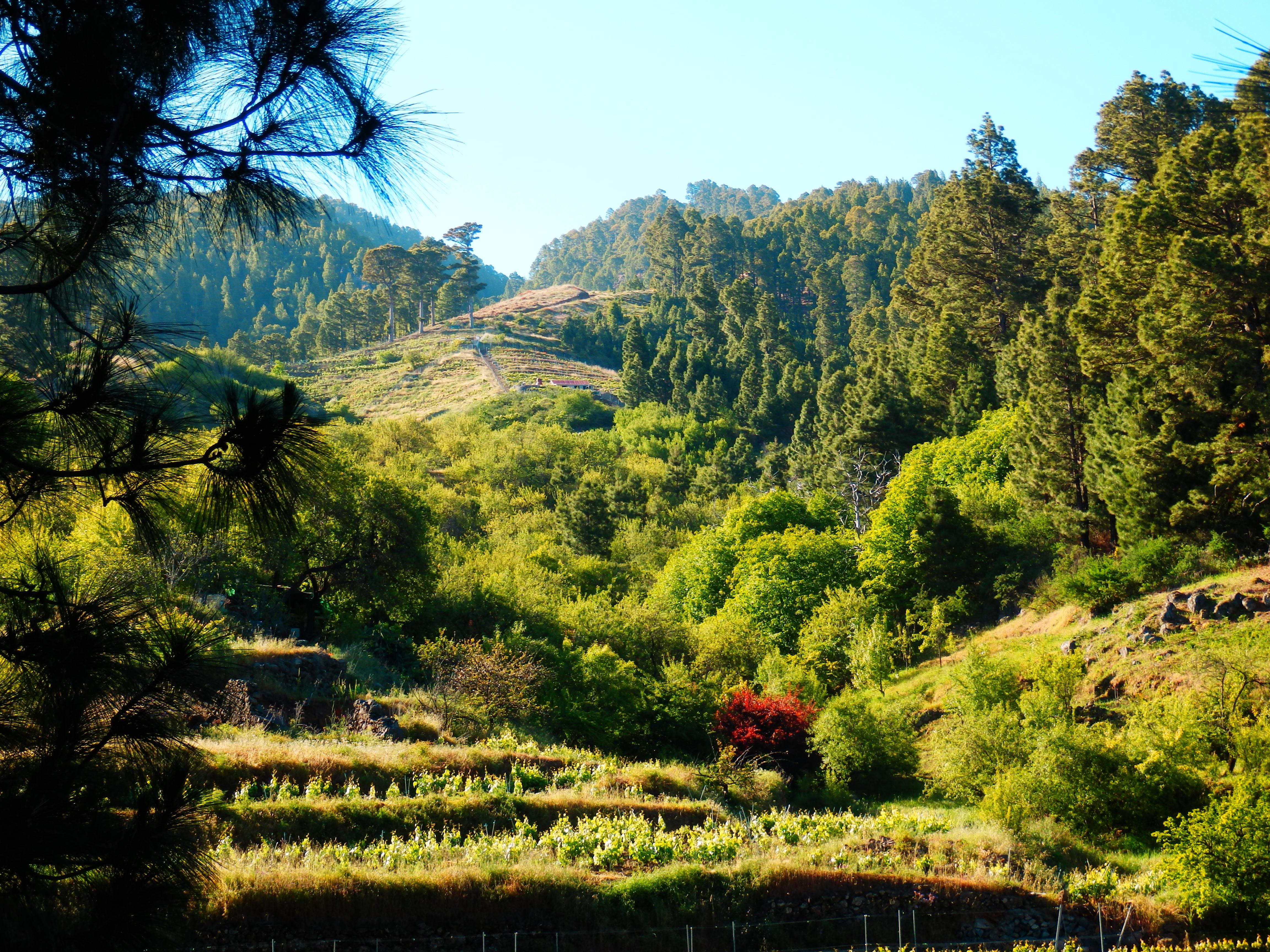 Tussen Briesta en Refugio Tinizara veel wijnbouw langs de Traviesa prlp 10